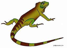 Gala lizard